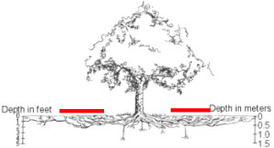 tree roots, showing extended dripline and typical depth