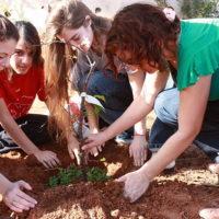 Parker Arbor Day Activities - Tree Service Parker Colorado